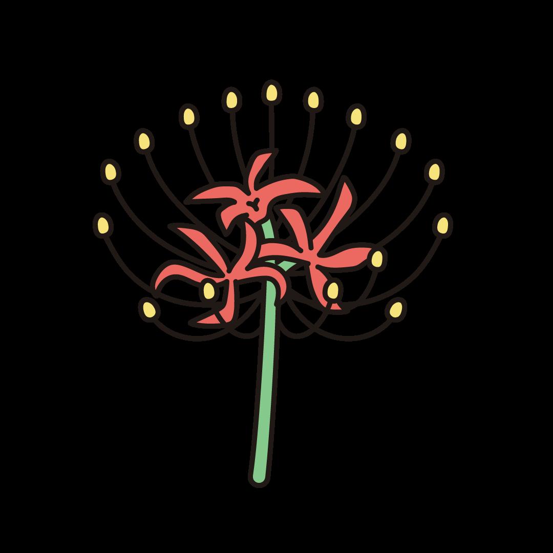 彼岸花(ヒガンバナ)